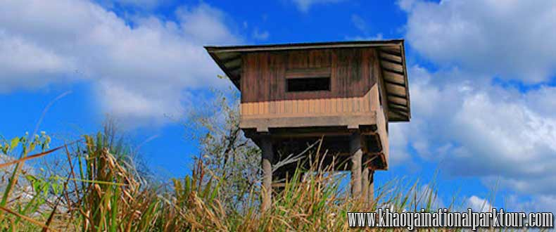 Nong Pak Chi Observation Tower Hiking, animal watching and forest camping in Khao Yai national park, Khao Yai Tour from Bangkok Thailand