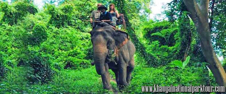 Enjoy to Elephant Ride at Khaoyai National Park, Khao Yai Elephant Trekking Day Tour