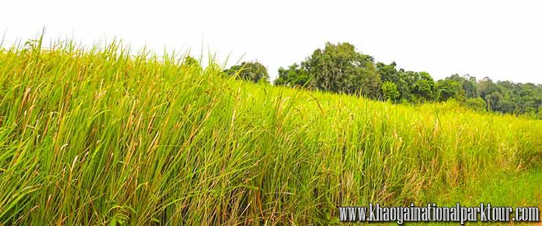 Green forest Khao Yai ,Khao Yai National Park Tours from Bangkok
