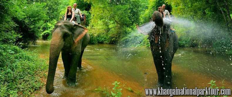 Khao yai national park elephant ride and trekking tour ,Khao Yai National Park Tours from Bangkok