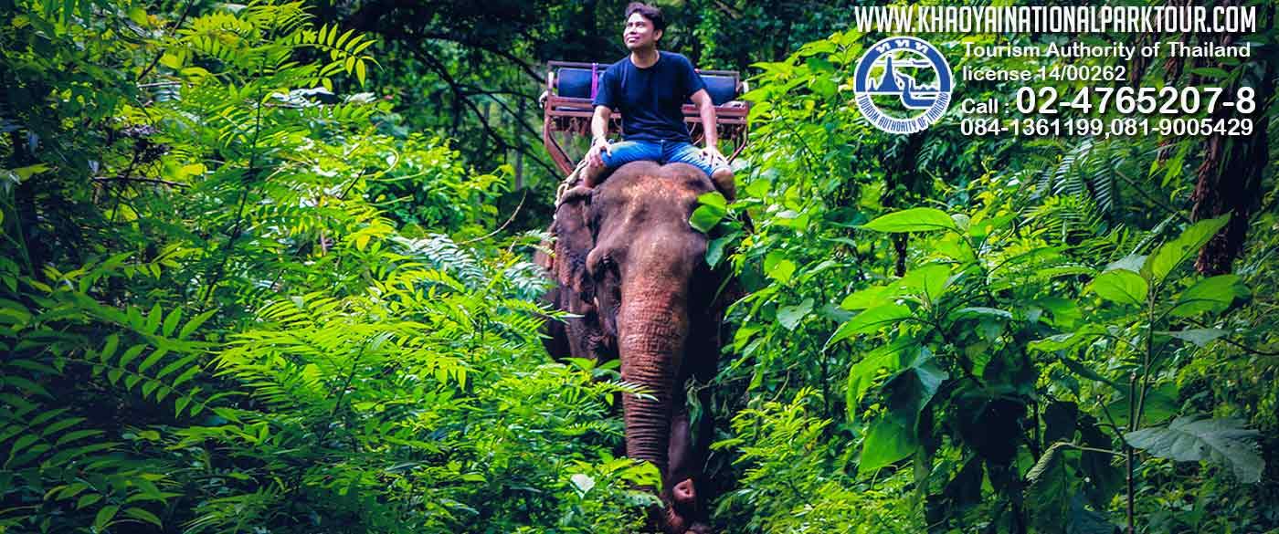 Khao Yai National Park Tour from Bangkok Thailand Khaoyai