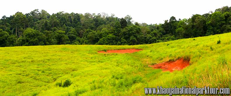 Khao Yai National Park, Green forest covers more than 2,000 square kilometers of forest and grassland in central Thailand. More than 50 km of hiking and biking trails wind through the long-standing nature preserve ,Khao Yai National Park Tours from Bangkok