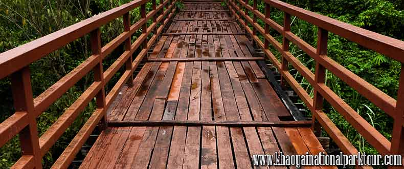 Cross to he wooden bridge in to the Jungle forest in Khao Yai National Park ,Khao Yai Tour from Bangkok Thailand