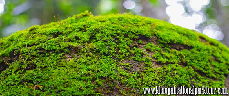 Amazing Experience in Jungle forest with ,Khao Yai Tour from Bangkok Thailand