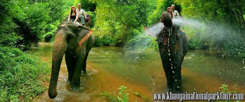 khao yai national park elephant ride and trekking tour ,Khao Yai National Park Tours from Bangkok