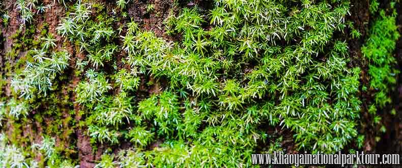 Green Firn Plant Forest in Khaoyai National Park, Khao Yai Trekking Tour