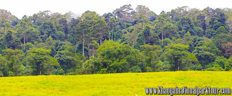 Khao yai trekking tour,day trip from bangkok to khao yai national park