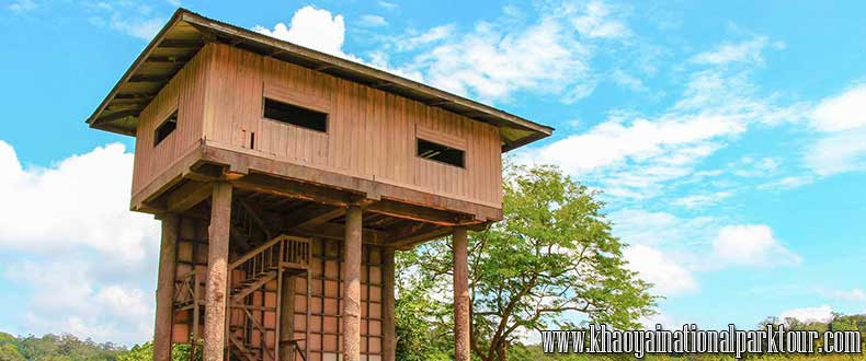 Nong Pak Chi Observation Tower Hiking, animal watching and forest camping in Khao Yai national park, Khao Yai National Park Tour Bangkok Thailand