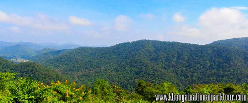 Green forest Khao Yai ,Khao Yai National Park Tours from Bangkok Thailand