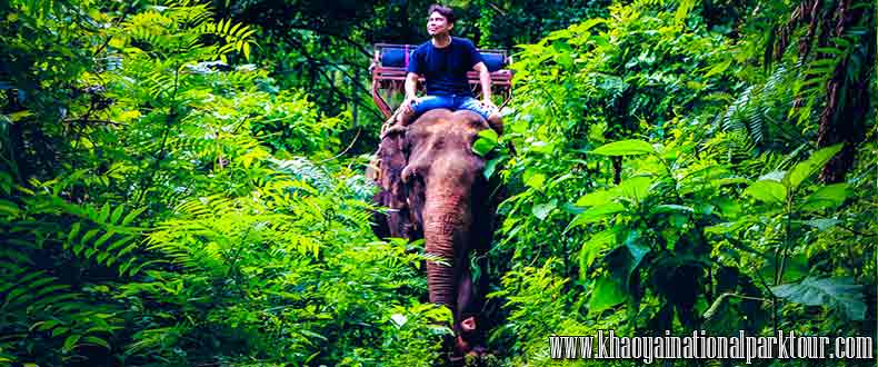 Very exciting Elephant trekking riding ,khao yai tour 2 days 1 night tour from Bangkok Thailand