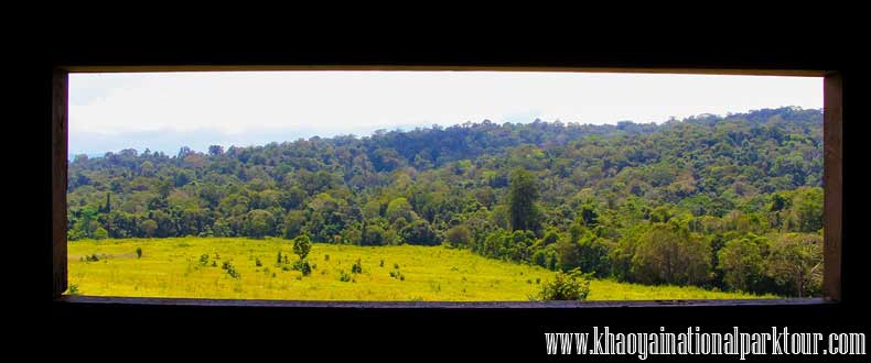 Green forest view from Nong pak chi observation tower Animals wildlife refreshing tower,Khao yai trekking tour