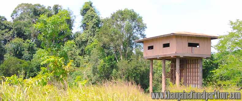 Nong pak chi observation tower Animals wildlife refreshing tower,Khao yai trekking tour