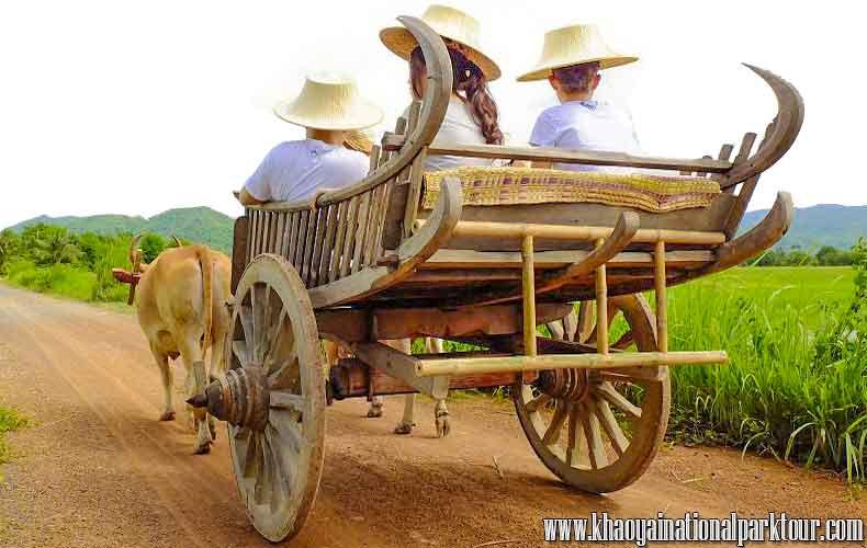 Enjoy Ox-cart trip tour near by Bangkok with cooking Class and Oxcart Ride tour, Thai Touch Tour Nakhon Nayok,Thailand