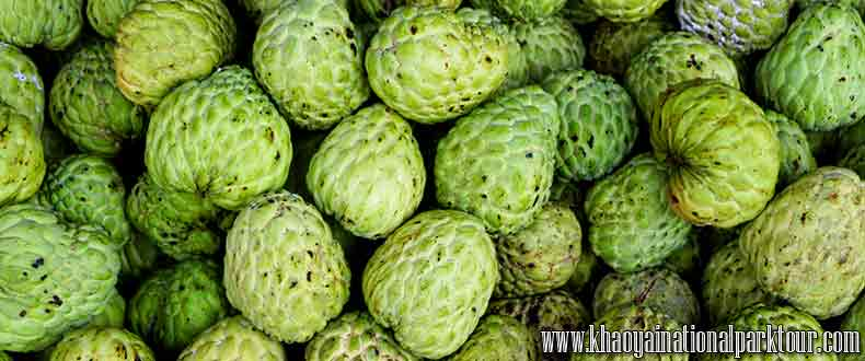 Custard Apple Thai Fruit, Visit Fruit plantation, Thai Touch Tour Nakhon Nayok