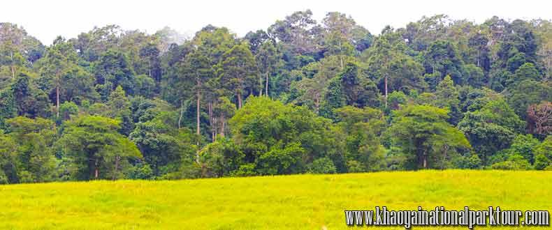 ทัวร์เขาใหญ่ เทรคกิ้ง เดินป่า วันเดียว จากกรุงเทพมหานคร สุ่ อุทยานแห่งชาติ เขาใหญ่