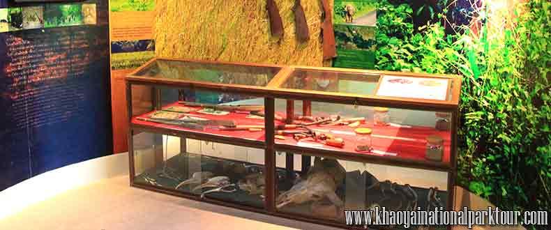 ทัวร์เขาใหญ่ เทรคกิ้ง เดินป่า วันเดียว ภายใน ศูนย์บริการ นักท่องเที่ยว อุทยานแห่งชาติ เขาใหญ่
