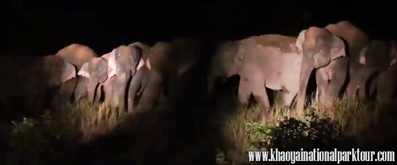 If you are lucky, you will see wild elephant eating the salt lick